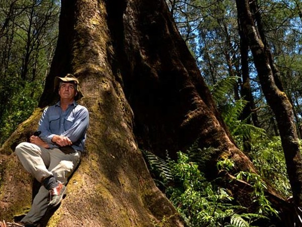 Top scientists back Australian ecologist in VicForests bushfire row