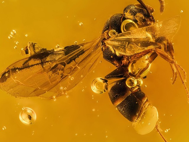 Photographing the Microscopic: Winners of Nikon Small World 2020