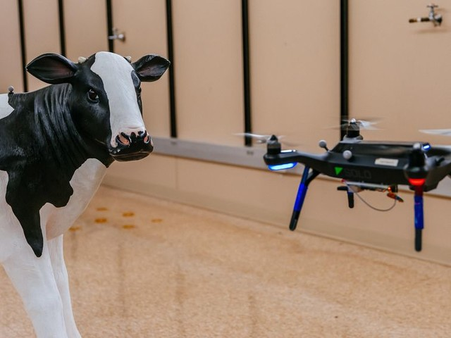 Facial recognition for cows: Drones on the farm - CNET