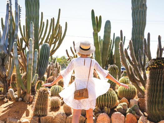'Cactus-mad' gardener's hobby grows into tourist drawcard