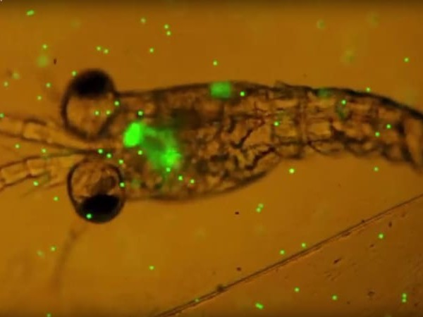 Microplastics have been found in humans for the first time. It's a worry