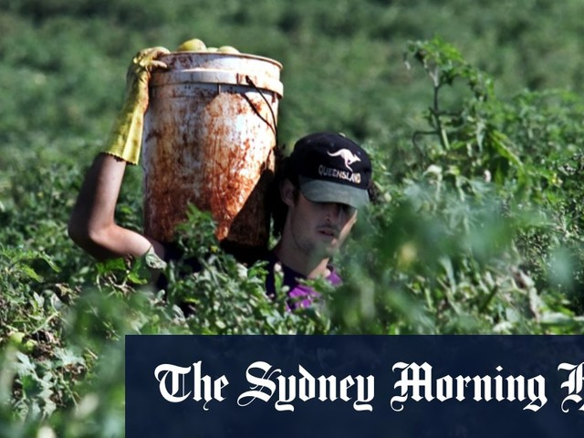 Unions want Australians, not backpackers, to get fruit-picking jobs