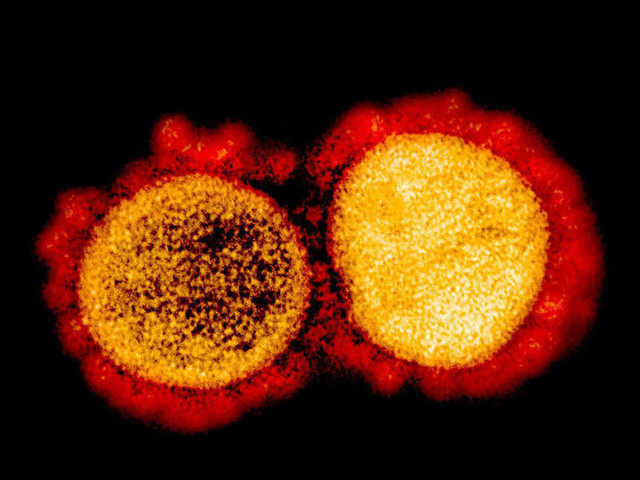 How many variants of the coronavirus are there?