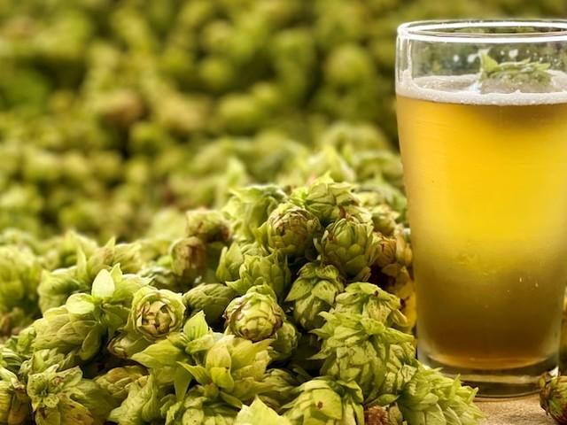 Brewing a new kind of West Australian hop