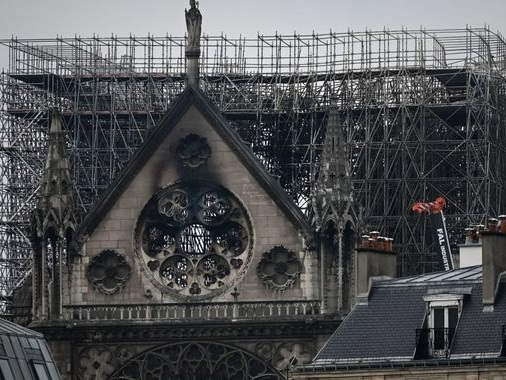 Rooftop bees survive Notre-Dame fire after being 'drunk'