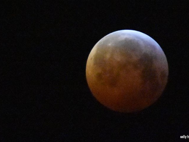 """PICTURES: """"Super blood wolf moon"""" spotted over Surrey"""