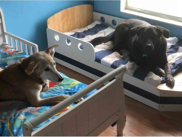 These 7 Rescue Dogs All Sleep in Toddler Beds, and Yup, They're Living Their Best Life