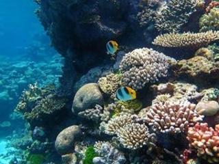 Gladstone Great Barrier Reef trips possible soon
