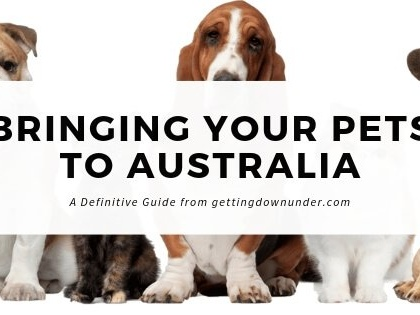 Taking Your Pet Cats And Dogs To Australia – A Definitive Guide