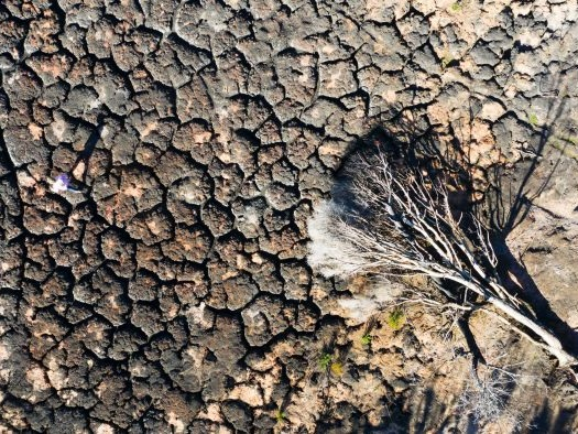 Planned burns are supposed to protect life. But they are destroying fragile ecosystems