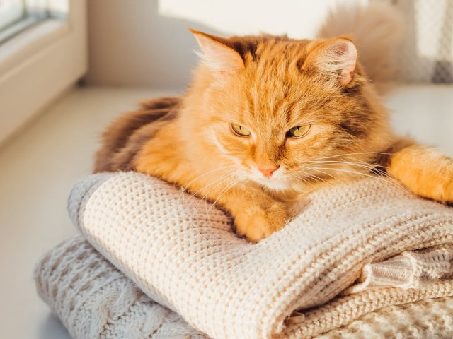 Your Cat Isn't Lying on Your Laundry Just to Cover It in Fur - It Could Be a Sign of Love!