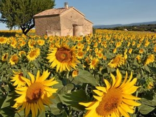 Free-flowing abundance served up in France