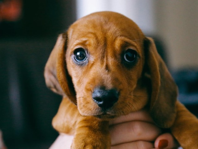 Looking Into Adopting a Pup? Here's Exactly What It Will Cost Every Year