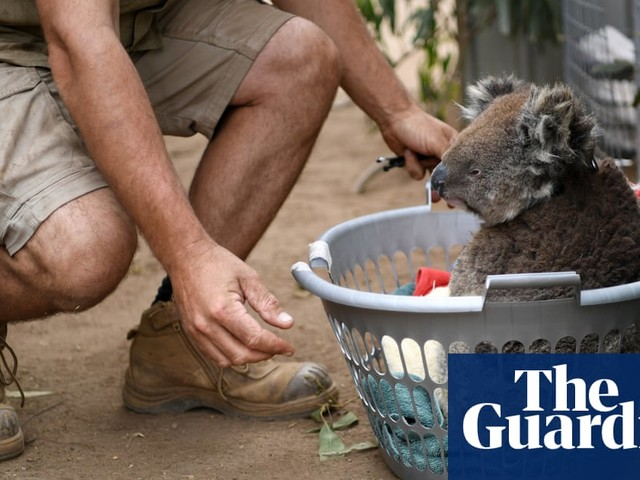 Why it could take a century for Australia's animals to recover from the bushfires – video explainer