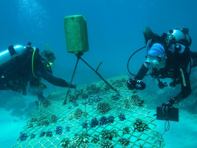 Multi-million dollar plan gives new hope for Reef