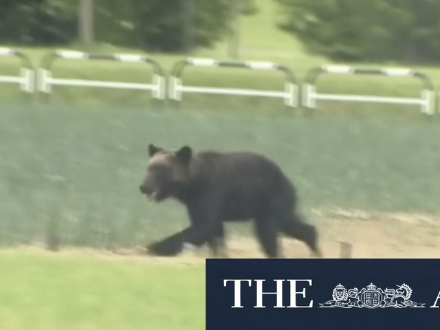 A 'smelly' swimming venue and a bear add alarm to Tokyo Games