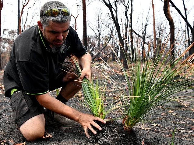 Indigenous leader calls for a rethink of NSW backburning policy