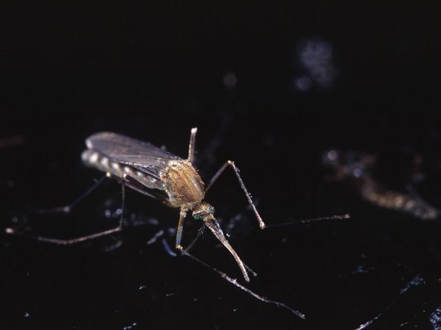 COLUMN Muggendans