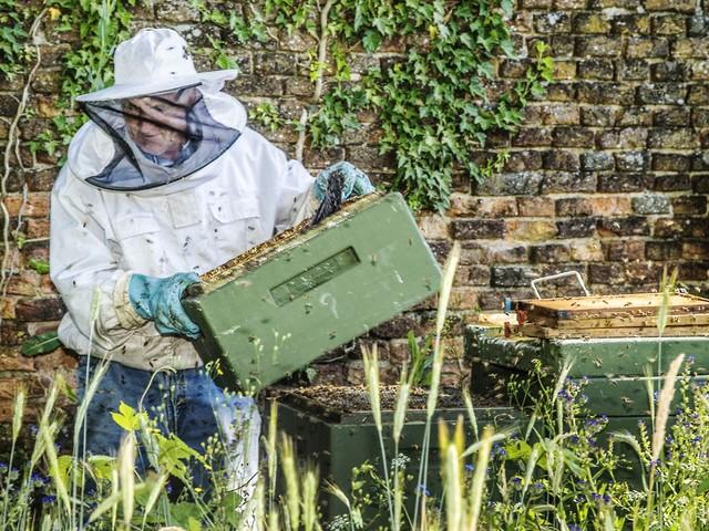 Plaats niet zomaar bijenkasten: 'Vergroot vooral het aantal bloemen'