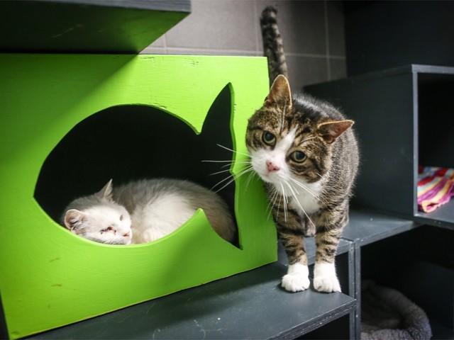 Alle Vlaamse gemeenten krijgen schuilhokken voor zwerfkatten