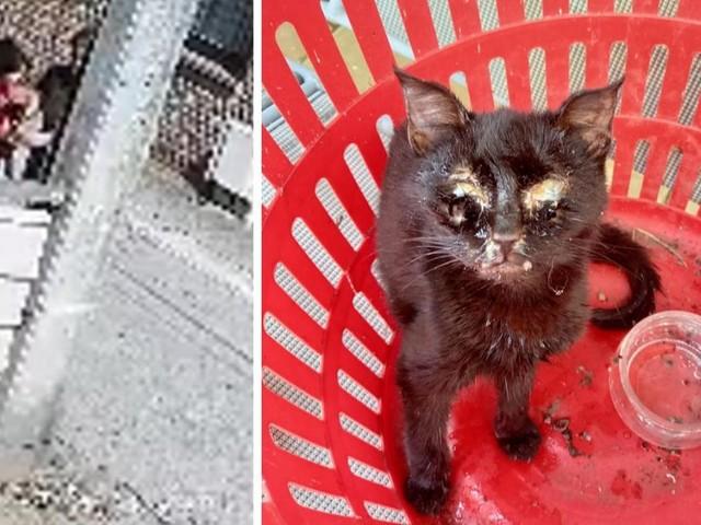 Terrible acte de maltraitance animale à Châtelet: une femme filmée en train de balancer un chaton dans la cour d'une maison