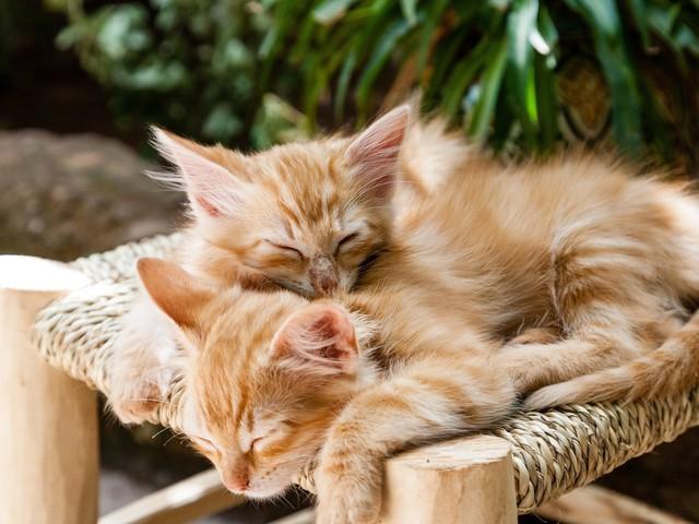 Tours : un hôtel de luxe dédié aux chats va ouvrir