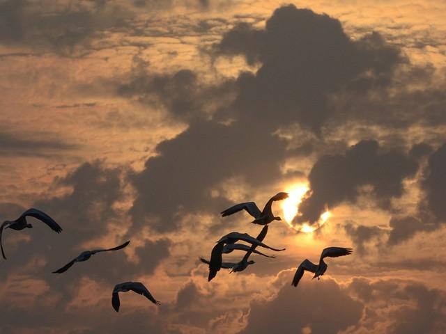 Des milliers d'oiseaux migrateurs tués par les vents violents en Grèce