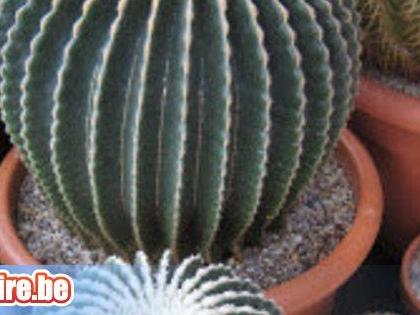 Vente de cactus