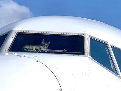 Insolite : un chat élit domicile dans un cockpit