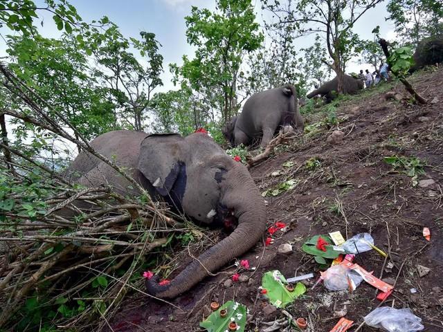 Morts mystérieuses en Inde: 18 dépouilles d'éléphants découvertes dans la jungle