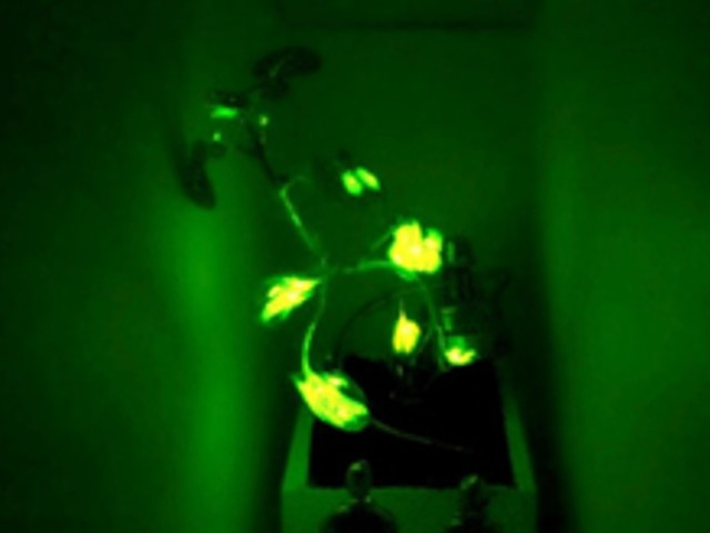 Et si nos futures lampes de chevet étaient des plantes luminescentes ?