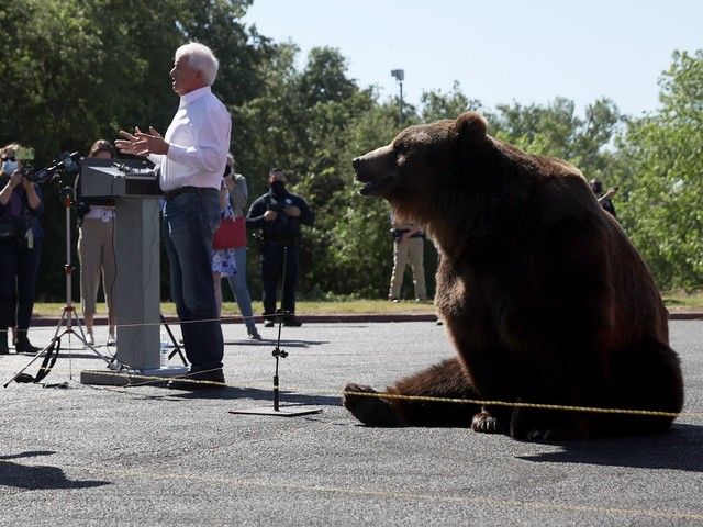 États-Unis : le candidat John Cox, qui mène campagne avec un ours brun, fait polémique