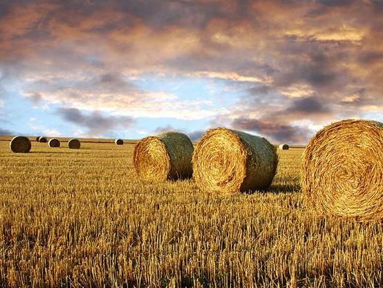 Agriculture : la FNSEA voudrait des pensions de retraites « au moins à 85% du Smic »