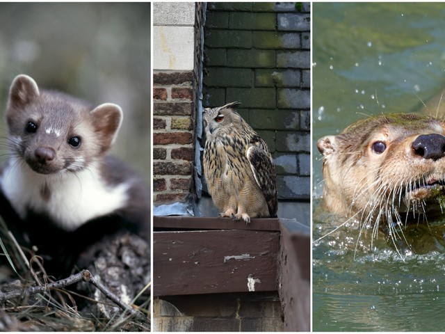 Deze 'zoologie' verovert stilaan Antwerpen: de beesten die de stadsbever vooraf gingen