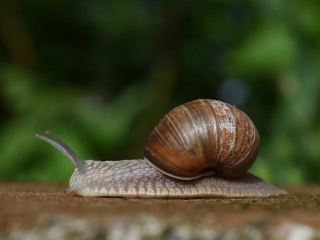 Salon de l'agriculture : les super pouvoirs de l'escargot