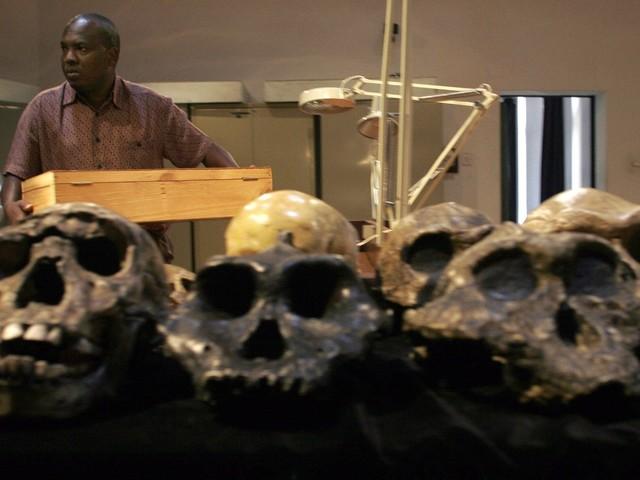L'Homo erectus serait né 200.000 ans plus tôt que ce que l'on pensait jusqu'ici