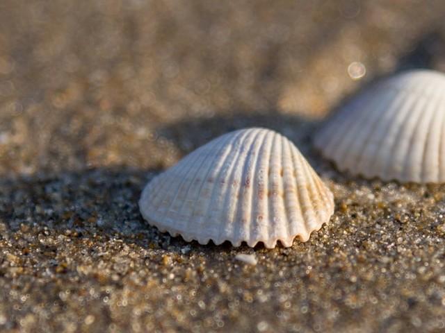 Sable, galets, coquillage: que prévoit la loi par rapport aux collectes sur les plages ?