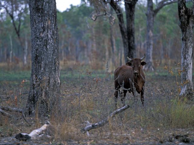Environnement : il n'existe plus que 3% de mammifères sauvages sur la Terre