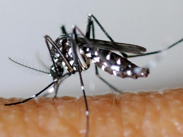 La menace est bien là: le moustique tigre encercle de plus en plus la Belgique!