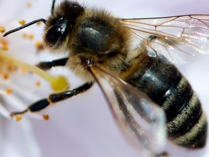 """Les abeilles de Notre-Dame sont sauvées: """"Cette espèce n'abandonne pas sa ruche. Je pensais qu'elles avaient brûlé"""""""