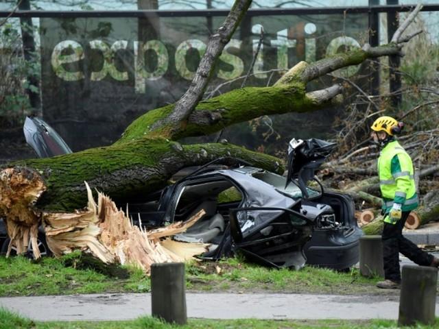 Rafales de vent à Paris: un automobiliste tué par une chute d'arbre