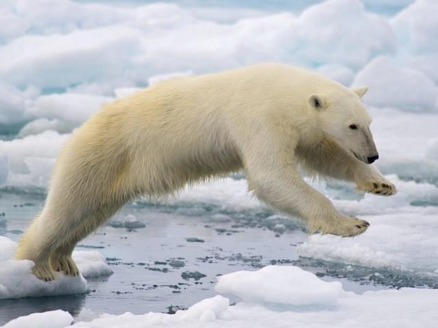 Effondrement : L'obsession pour le PIB et le mépris de la nature menacent nos écosystèmes