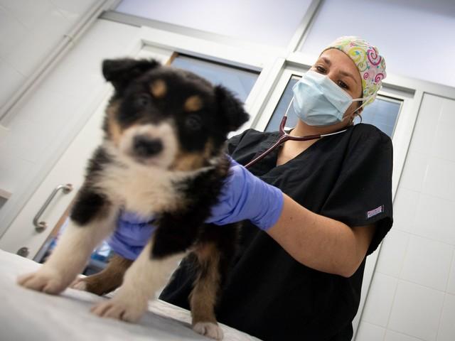 Coronavirus : nos animaux de compagnie peuvent-ils être contaminés ?