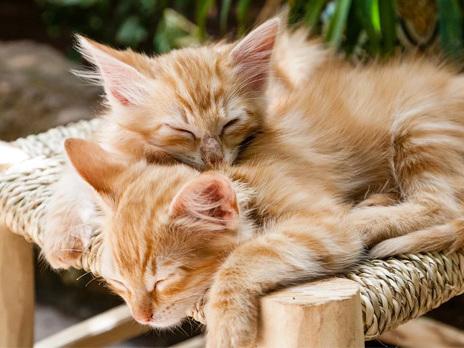 Insolite: réservation spéciale pour ses chats