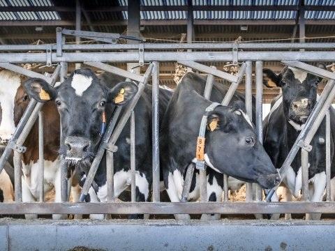De landbouwers die hun veeteeltbedrijf door stikstof moesten achterlaten