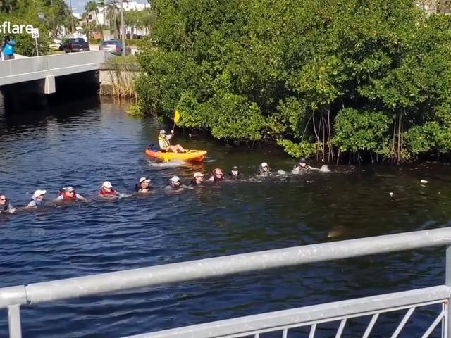 Hartverwarmend: verdwaalde dolfijnen in kanaal gered door menselijke ketting