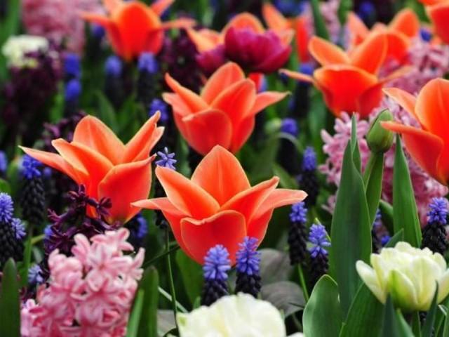 Les «Six jours verts», l'évènement pour tout apprendre sur vos plantes favorites