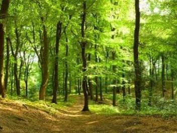 Center Parcs de Roybon : Pompili salue l'abandon d'un projet de l'« ancienne période »