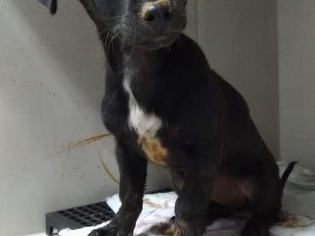 Filhote de cachorro preso em tubulação é resgatado em SC