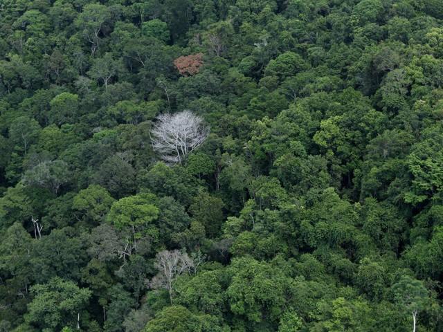 Mitos sobre a maior floresta tropical | Amazônia ajuda regular clima global, mas não é o pulmão do mundo